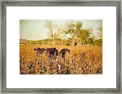 Hiding In The Cotton Framed Print by Jan Amiss Photography