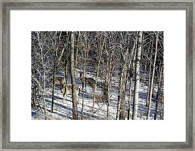 Hiding In The Forest Framed Print by Debbie Oppermann