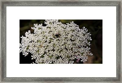 Hiding In The Lace Framed Print by Teresa Mucha