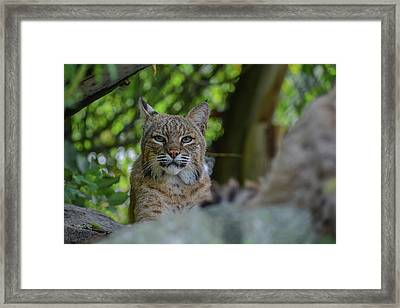 Hiding In The Rocks Framed Print