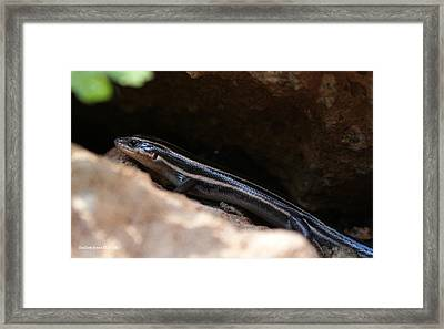 Hiding Out Framed Print by Shelley Jones