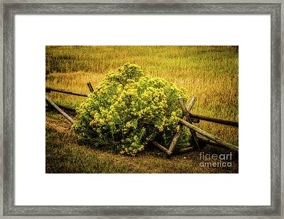 Hiding Place Framed Print by Jon Burch Photography