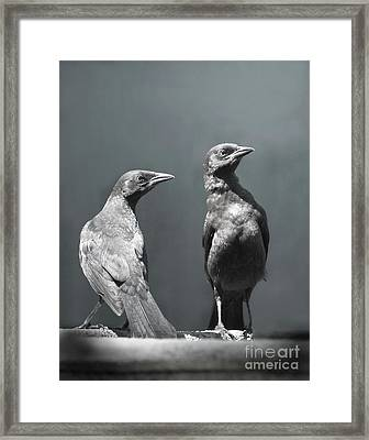 High Alert Framed Print