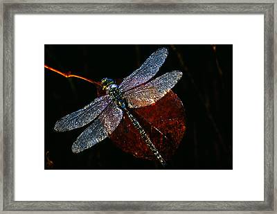 High Angle View Of Blue Darner Framed Print