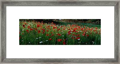 High Angle View Of Wildflowers, Ncdot Framed Print