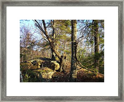 High Atop White's Road Solitude Is Met By Dawn Framed Print by Terrance DePietro