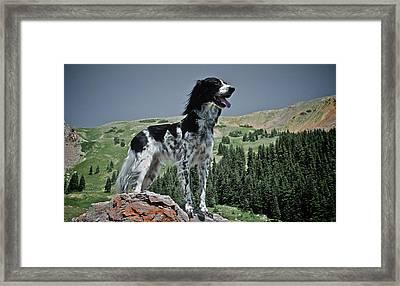 High Country, English Setter Framed Print by Flying Z Photography By Zayne Diamond