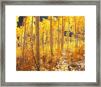 High Country Gold Framed Print by The Forests Edge Photography - Diane Sandoval