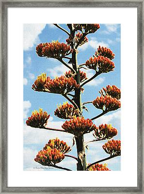 High Country Red Bud Agave Framed Print