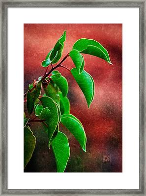 High Desert Leaves Framed Print