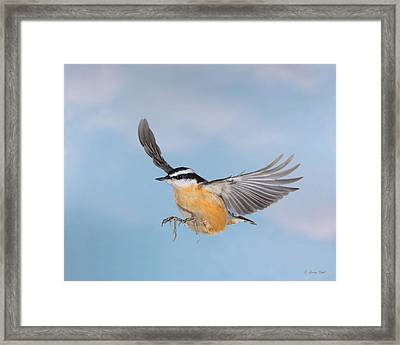 High Flyer Framed Print by Gerry Sibell