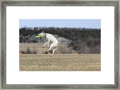 High Flying Max Framed Print by Patricia Olson