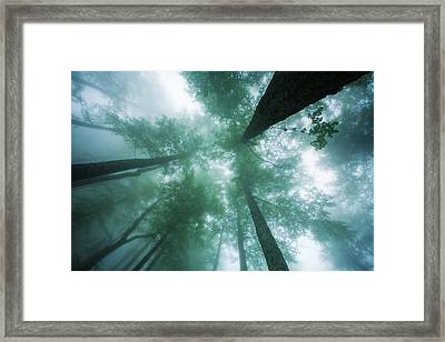 High In The Mist Framed Print by Evgeni Dinev