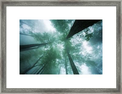 High In The Mist Framed Print