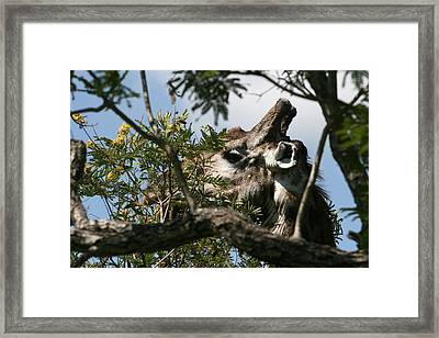 High In The Trees Framed Print by Andrei Fried