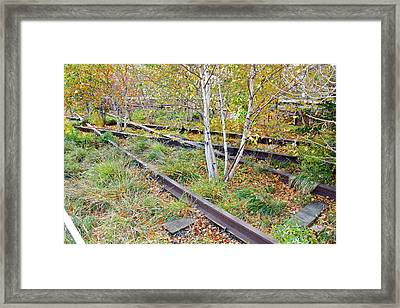 High Line Print 2 Framed Print by Terry Wallace
