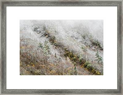 High Mountain Forest, Covered By Snowy Hoar Frost, Huanglong Framed Print by Sergey Orlov