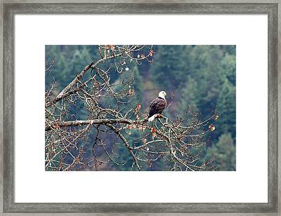 High Perch Framed Print by Mike DeCesare