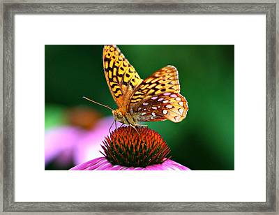 High Performance Framed Print
