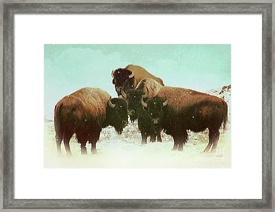 High Plains Bison Framed Print by KaFra Art