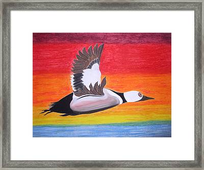 High Sped Duck Framed Print