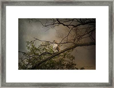 Higher Perspective Framed Print
