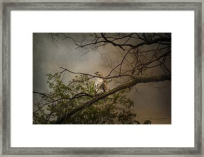 Higher Perspective Framed Print by Karen Casey-Smith
