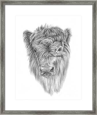 Highland Calf Framed Print