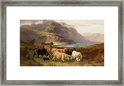 Highland Cattle With A Collie Framed Print by Joseph Adam
