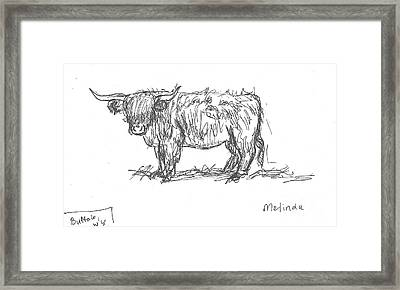 Highland Cow Field Sketch Framed Print by Dawn Senior-Trask