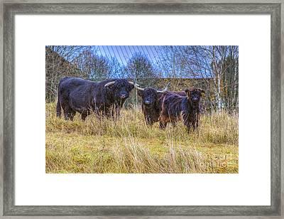 Highland Family Framed Print