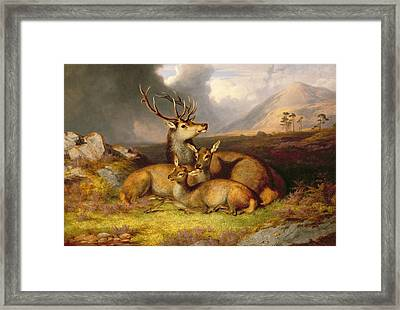 Highland Felicity Framed Print by James Gills