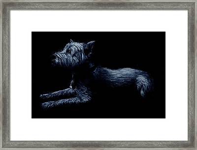 Highland Terrier Framed Print