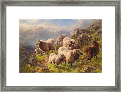 Highland Wanderers Framed Print