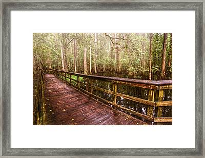 Highlands Hammock Framed Print by Debra and Dave Vanderlaan