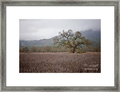 Highway Oak Framed Print by Derek Selander