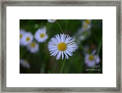 Hi,i Am Daisy Framed Print by Eva Maria Nova