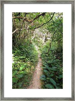 Hiking Path In The Atlantic Forest Framed Print