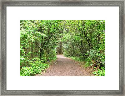 Hiking Trail Along Lewis And Clark River Framed Print