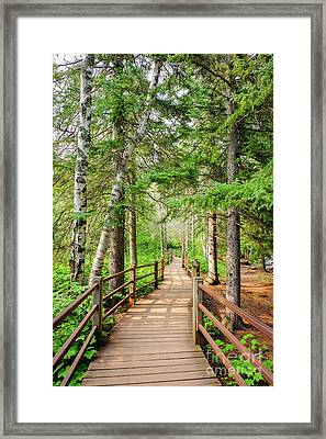 Hiking Trail Framed Print
