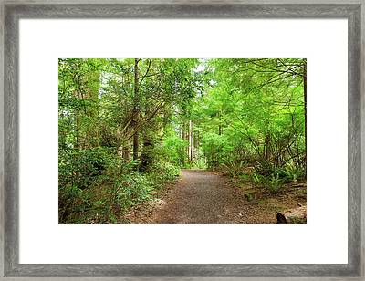 Hiking Trail Through Forest Along Lewis And Clark River Framed Print