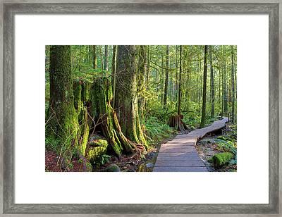 Hiking Trail Through Forest In Lynn Canyon Park Framed Print