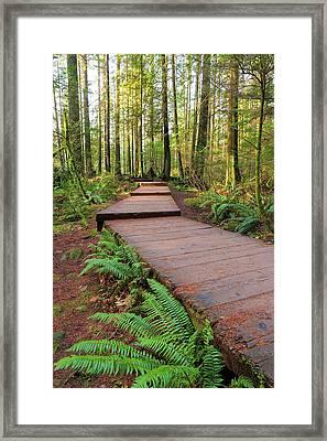 Hiking Trail Wood Walkway In Lynn Canyon Park Framed Print