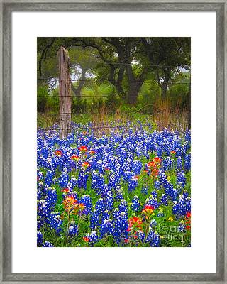 Hill Country Forest Framed Print by Inge Johnsson