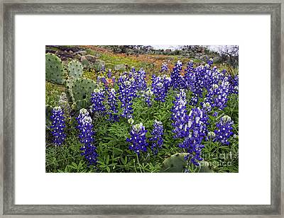 Hill Country Palette Framed Print