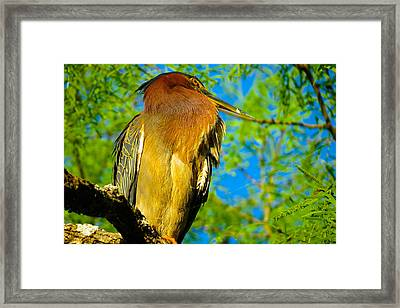 Hill Country Perch Framed Print by David  Norman