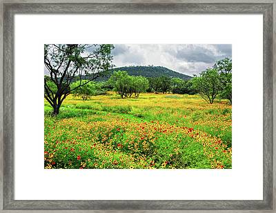 Hill Country Wildflowers Framed Print by Lynn Bauer