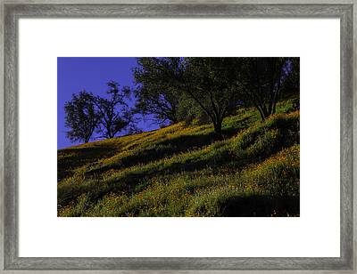 Hill Side Poppies Framed Print