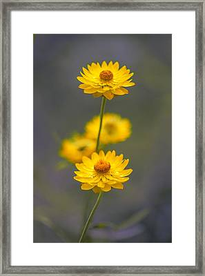 Hillflowers Framed Print by Az Jackson