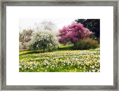 Hills Of Daffodils Framed Print by Jessica Jenney